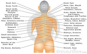 spine-organ-correlation-connected-all-organs-can-cause-pain-different-parts-body-autonomic-nervous-62368019